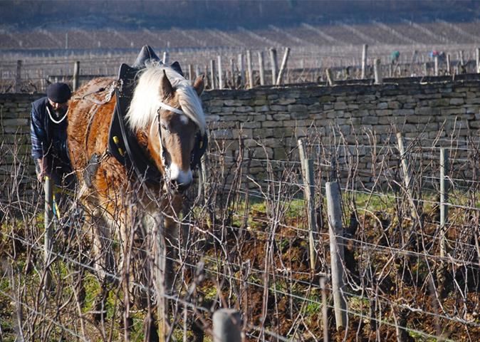 Un domaine viticole bourguignon authentique et du terroir