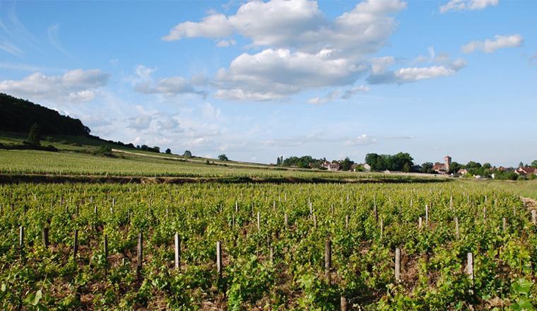 Les grands vins de Bourgogne - Domaine viticole Gallois