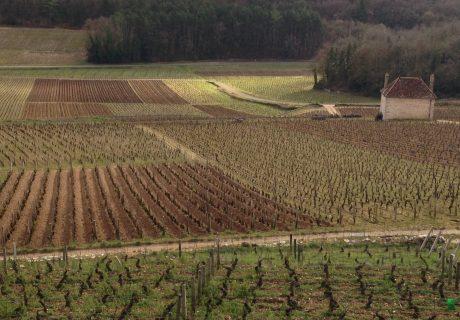 Comprendre la Bourgogne: le vignoble en drone